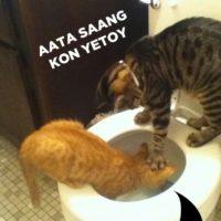 Cats Anna Yenar Marathi Memes
